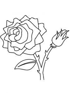 raskraski-cvety-rose-21