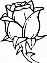 raskraski-cvety-rose-3