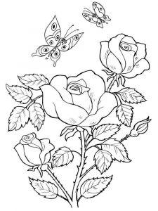 raskraski-cvety-rose-5
