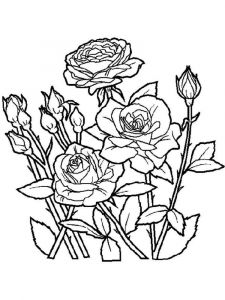 raskraski-cvety-rose-7