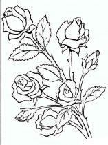 raskraski-cvety-rose-9