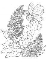 raskraski-cvety-siren-3