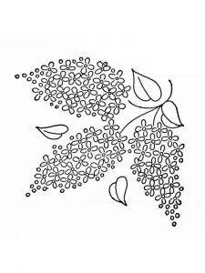 raskraski-cvety-siren-9