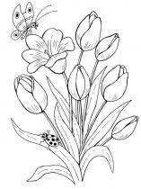 raskraski-cvety-tulpan-10