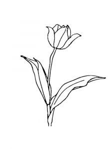 raskraski-cvety-tulpan-11