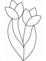 raskraski-cvety-tulpan-3