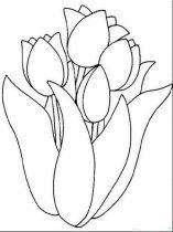 raskraski-cvety-tulpan-4