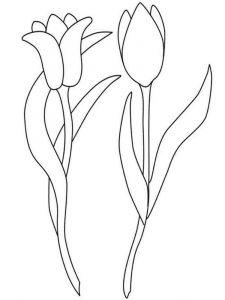 raskraski-cvety-tulpan-5