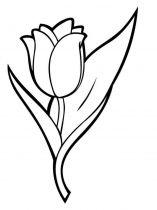 raskraski-cvety-tulpan-7