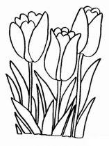 raskraski-cvety-tulpan-8