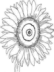 raskraski-dlja-detei-podsolnuh-6
