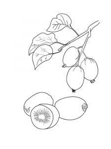 raskraski-frukty-Kiwi-2
