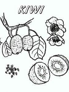 raskraski-frukty-Kiwi-7