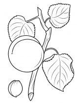 raskraski-frukty-abrikos-11