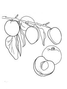 raskraski-frukty-abrikos-3