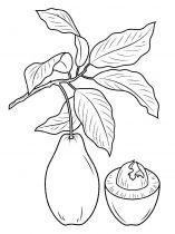 raskraski-frukty-avokado-2