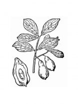 raskraski-frukty-avokado-8