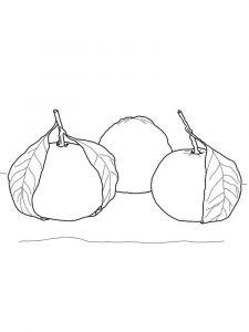 raskraski-frukty-mandarin-5