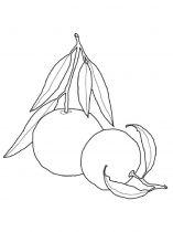 raskraski-frukty-mandarin-9