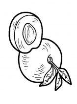 raskraski-frukty-nektarin-5