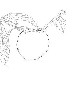 raskraski-frukty-nektarin-6