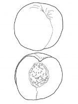 raskraski-frukty-nektarin-8