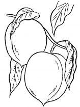 raskraski-frukty-persik-1