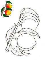 raskraski-frukty-persik-9