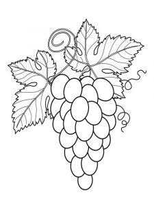 raskraski-frukty-vinograd-1