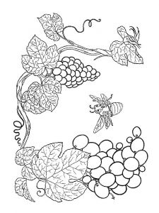 raskraski-frukty-vinograd-11
