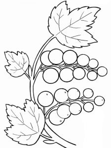raskraski-frukty-vinograd-16