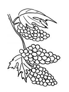 raskraski-frukty-vinograd-2