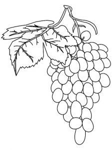 raskraski-frukty-vinograd-4