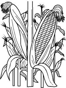 raskraski-kukuruza-10