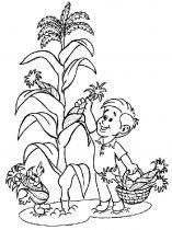 raskraski-kukuruza-8