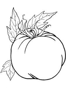 raskraski-pomidor-12
