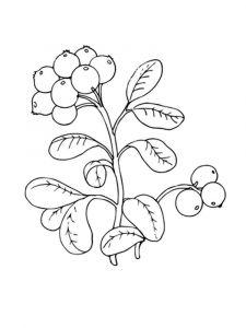 raskraski-yagoda-brusnika-5