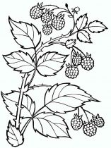 raskraski-yagoda-malina-2