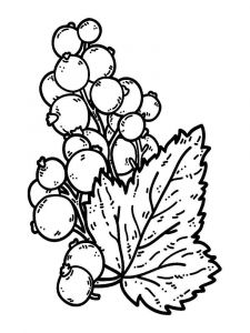 raskraski-yagoda-smorodina-1