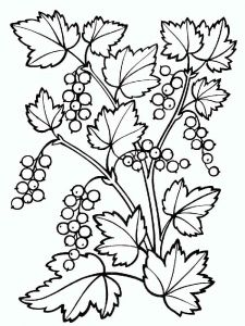 raskraski-yagoda-smorodina-3