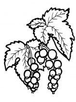 raskraski-yagoda-smorodina-5